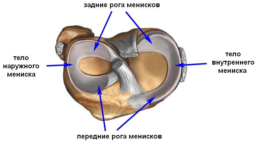 Мениск колена