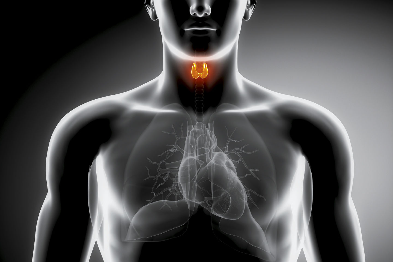 Нарушения работы щитовидки
