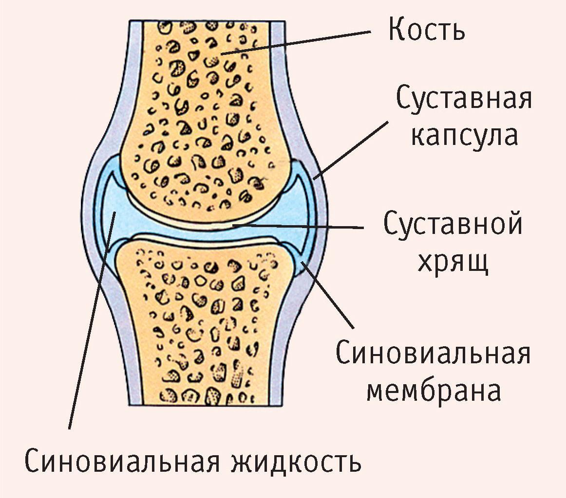 Расположение суставной жидкости