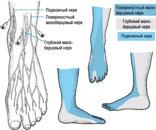 Воспаление нервов стоп