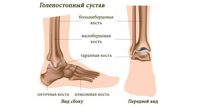 Изображение - Функции суставов нижних конечностей golenostopeyj-sustav